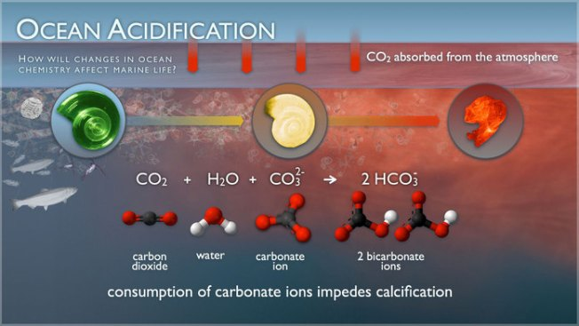 Ocean Acidification ProcessImage: NOAA Pacific Marine Environmental Laboratory