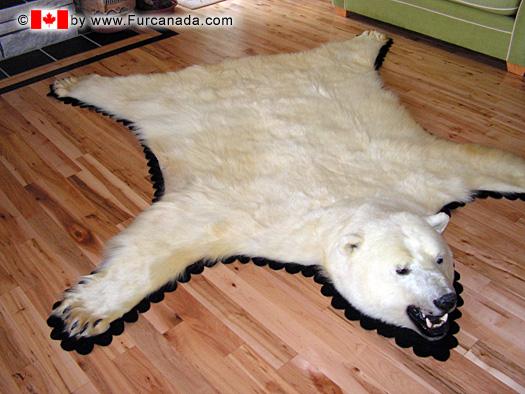 Real Bear Skin Rug Home Decor