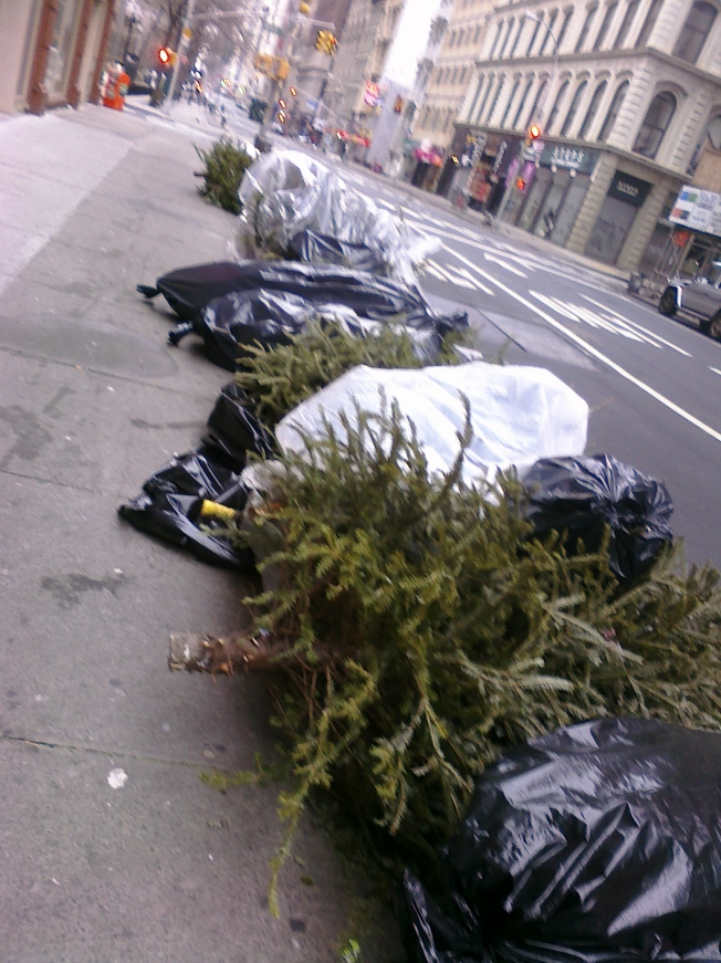 Trees in Lower Manhattan.Unfortunately, most of these trees are headed for the dump because they are wrapped in plastic