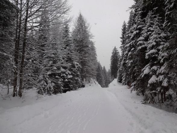 Ferchenbach hiking path, Germany