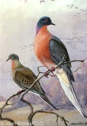 Image via: www.birds.cornell.edu/AllAboutBirds