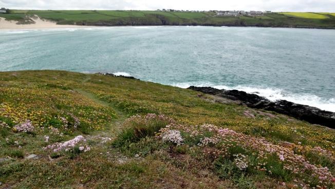 Headland view  Photo: PK Read