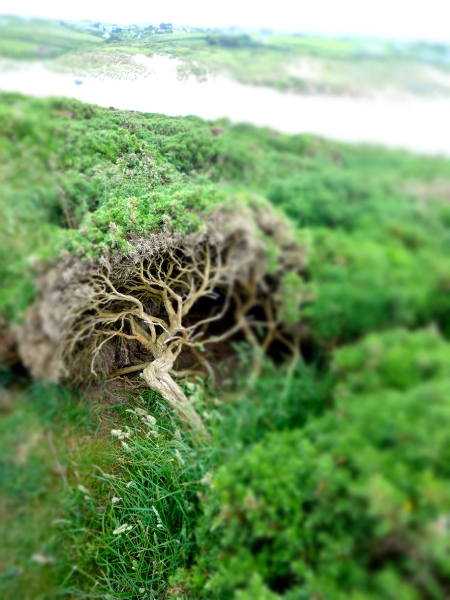 Tiny forest Photo: PK Read