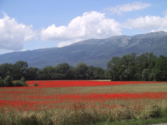 Wheat fields, eastern France, 2012
