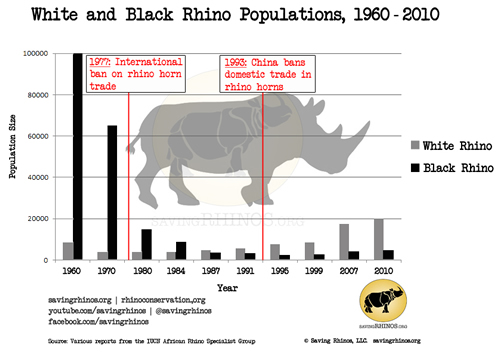 the black rhinoceros essay
