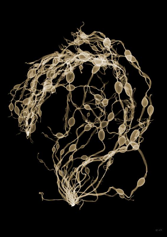 Seaweed Swirl Image: Nick Veasey