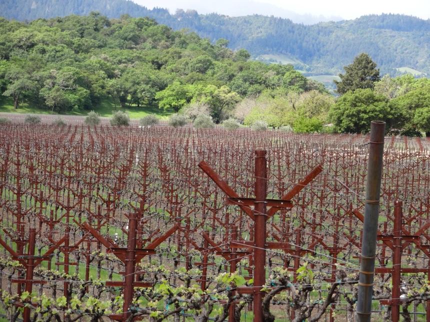Spring vineyard, Napa Valley, California Photo: PK Read