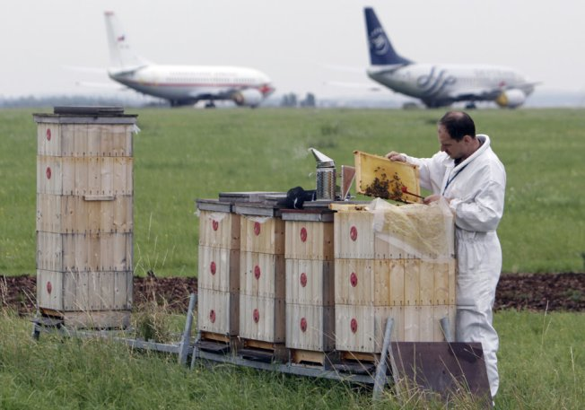 Honey produced by bees at the Vaclav Havel Airport in Prague is checked for its quality and presence of pollutants in the environment. Caption and credit: REUTERS/David W Cerny