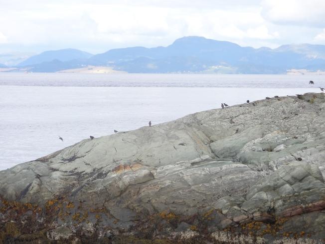 Trondheimsfjord Photo: PK Read