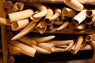 © WWF-Canon / Folke Wulf