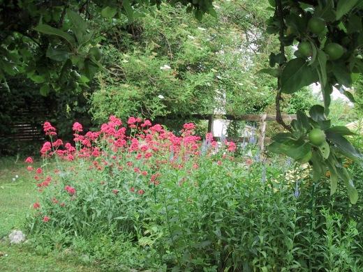 The old garden.