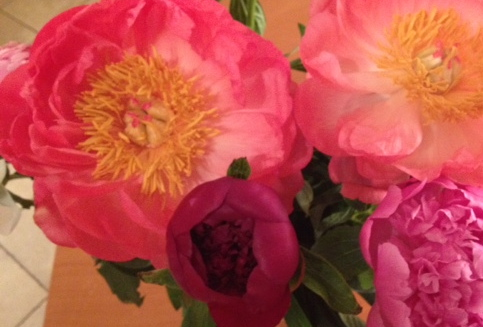 Peonies (without flash)
