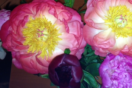 Peonies (with flash)