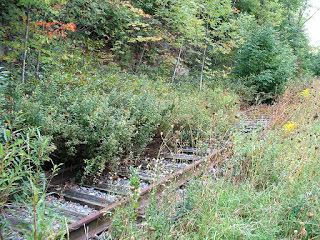 Overgrown railroad tracks Photo: Frank Dutton