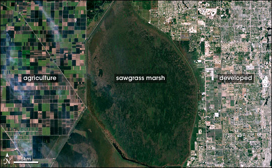 Landsat images clearly show different types of landcover in southern Florida. Source: NASA/Robert Simmon