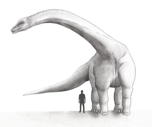 Dreadnoughtus scharni Source: E. Eng, National Geographic, M.C. Lamanna, Carnegie Museum of Natural History