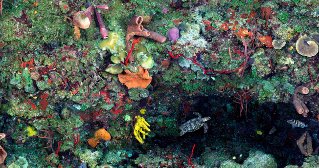 """Great Wall West"", shear coral reef wall Little Cayman Island Photo: Jim Hellemn"