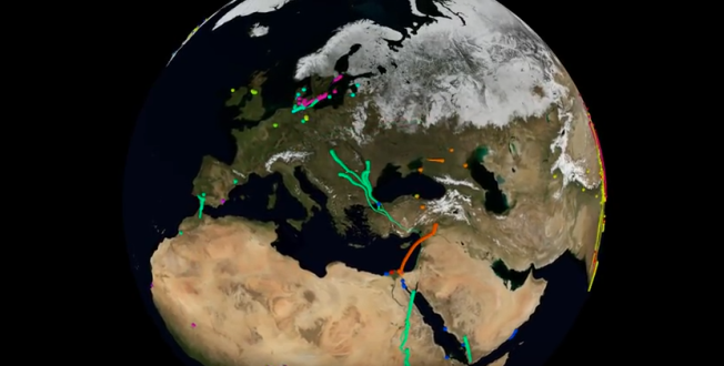 Migratory bird routes mapped and animated by Movebank, a project of Max Planck Institute of Ornithology, which collects and communicates migration research for a wide variety of migratory animals. Source: Movebank