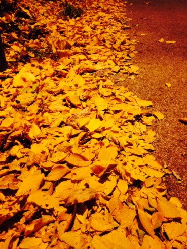 Fallen leaves under a village streetlamp.
