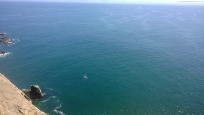 The white spots offshore are the whale and her calf.  Photo: Oliver Brüning