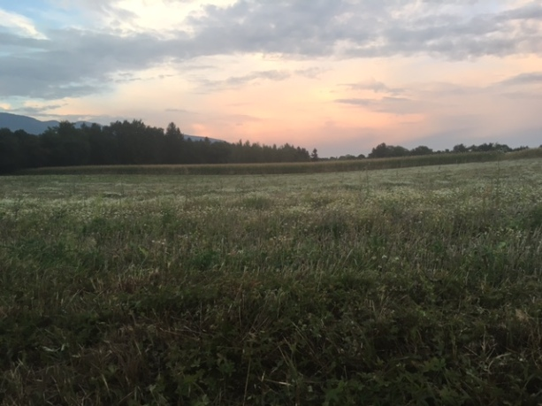 Fallow field against a dry cornfield, with dry clouds at sunset. Photo: PKR